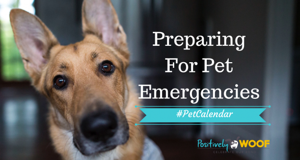prepare for pet emergencies