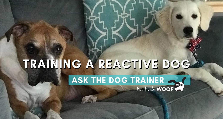 train a reactive dog