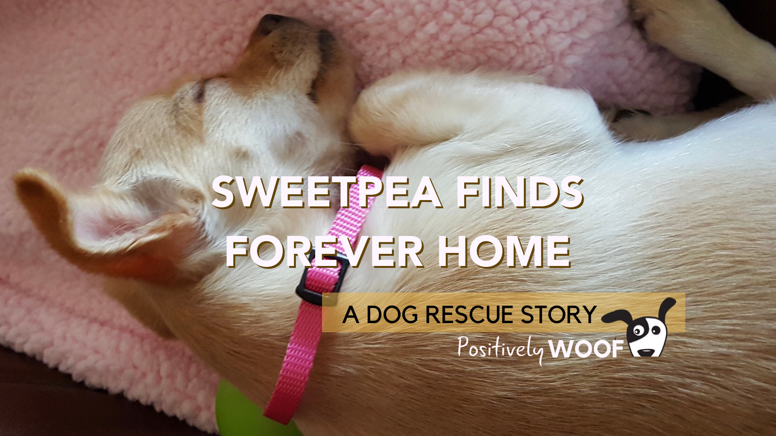 a dog rescue story