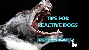 tips for reactive dogs