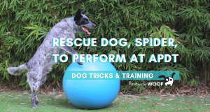 rescue dog spider at apdt