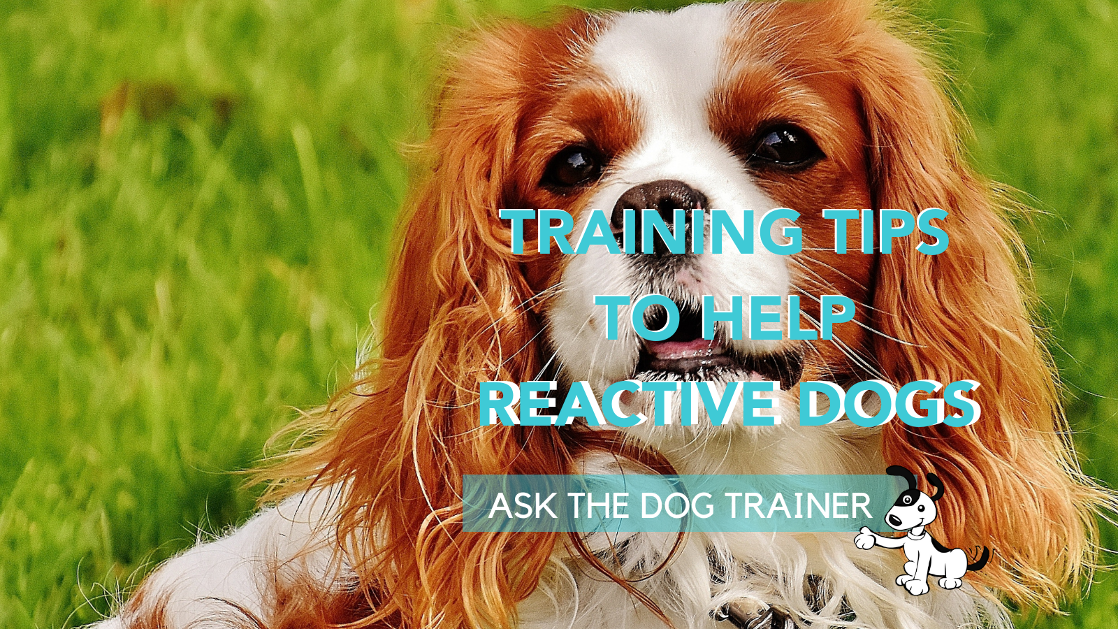 TRAINING TIPS FOR REACTIVE DOGS