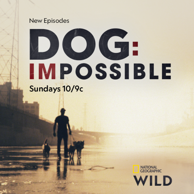 Dog impossible matt beisner interview