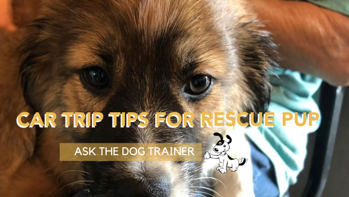 ask the dog trainer