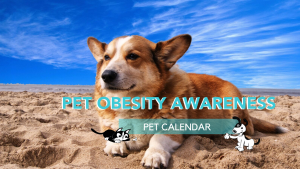 pet obesity awareness