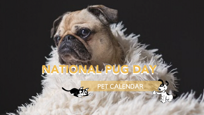 national pug day