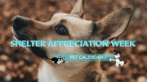 shelter appreciation week