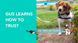 DOG RESCUE STORY
