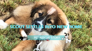 dog rescue story