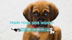 Pet Calendar: Train Your Dog Month