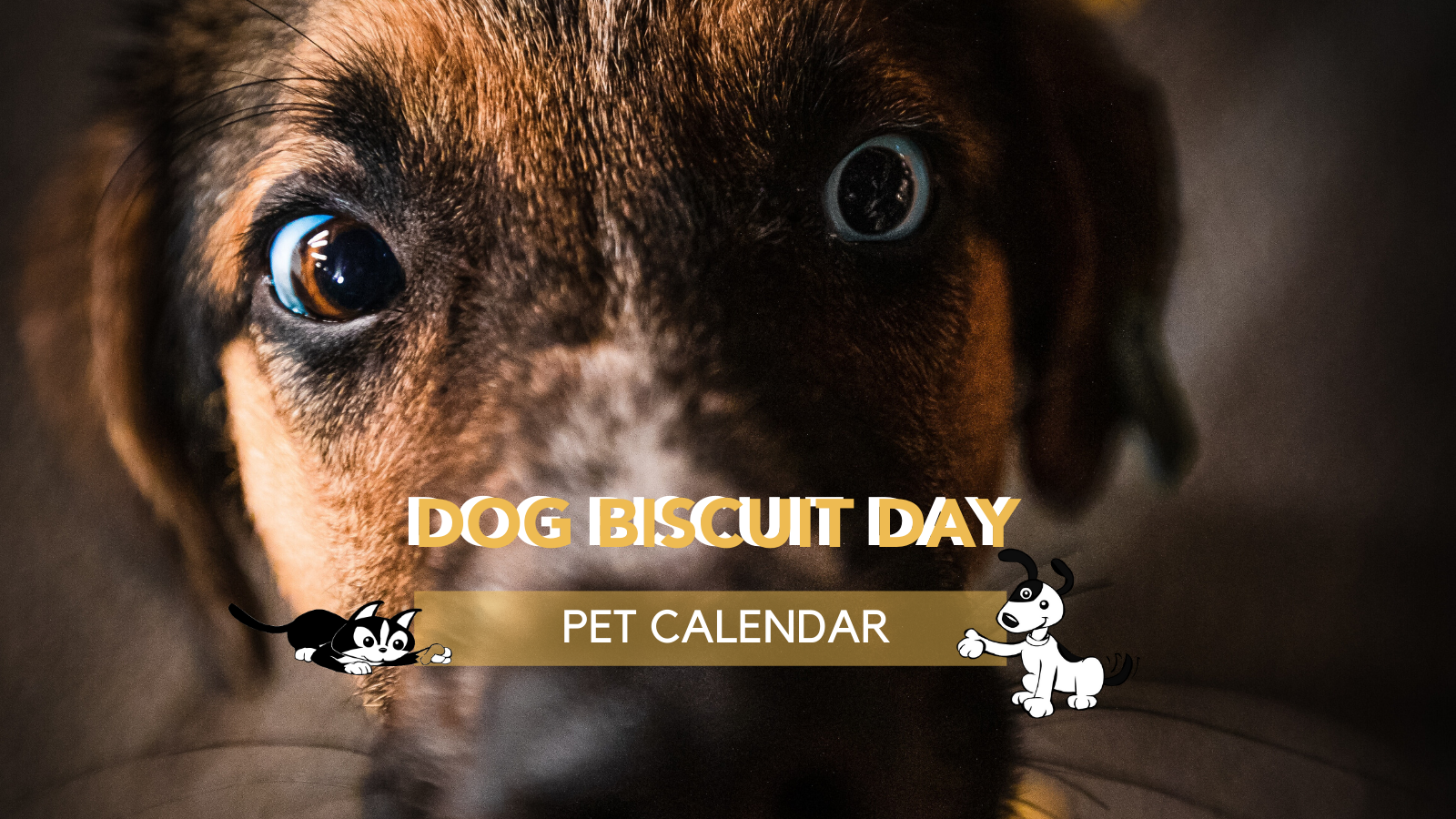 dog biscuit day